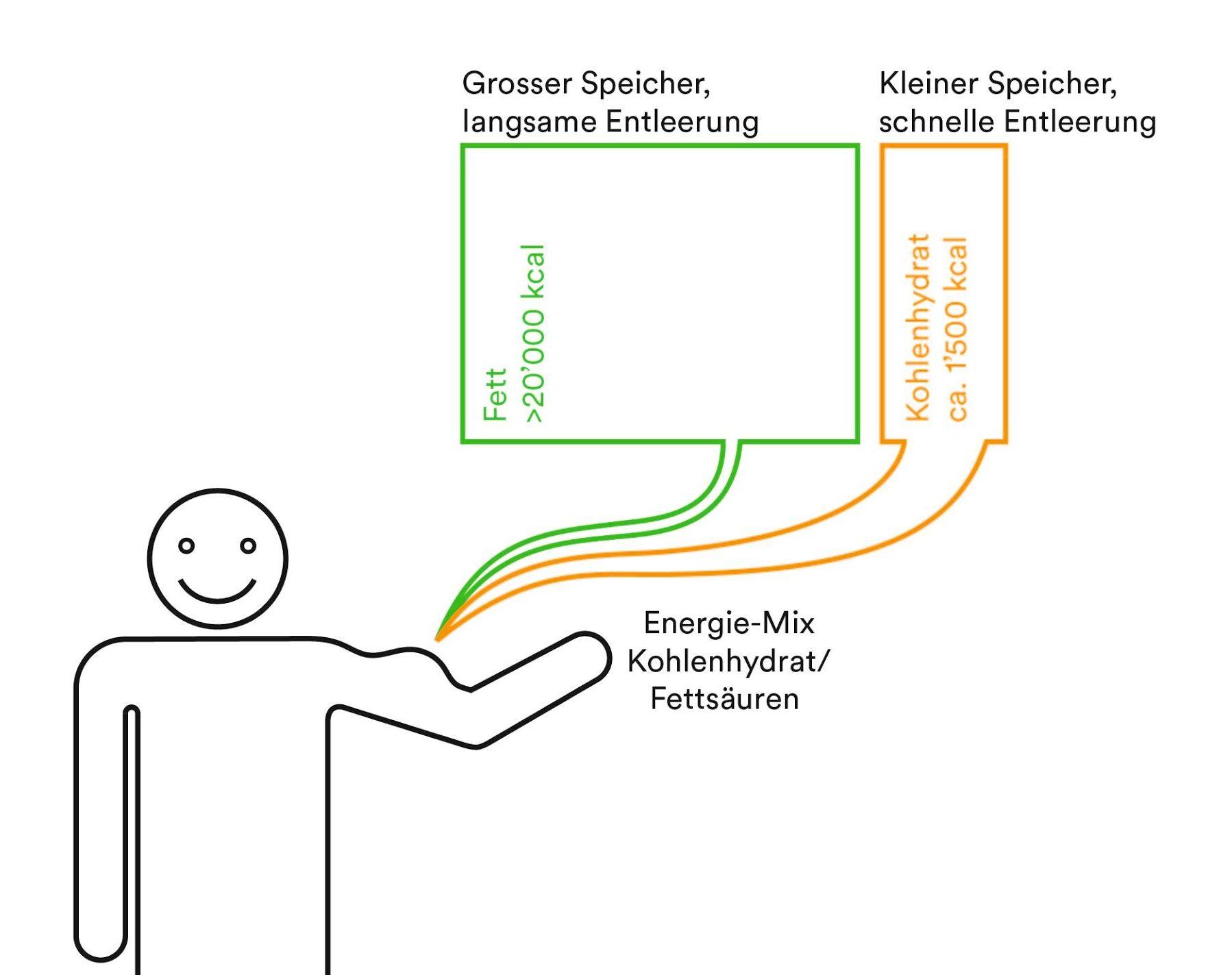 Abbildung 1: Energieverbrauch in Abhängigkeit unserer Energiereserven.
